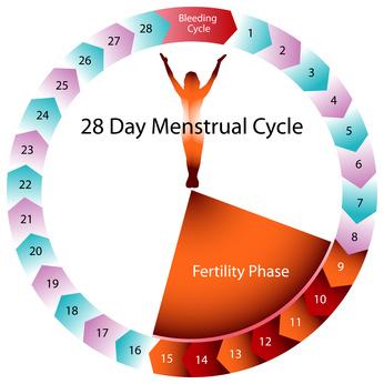 Fruchtbarkeit Menstruation