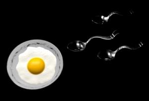 Ei Befruchtung