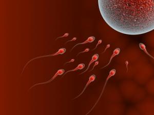 Befruchtung Spermien
